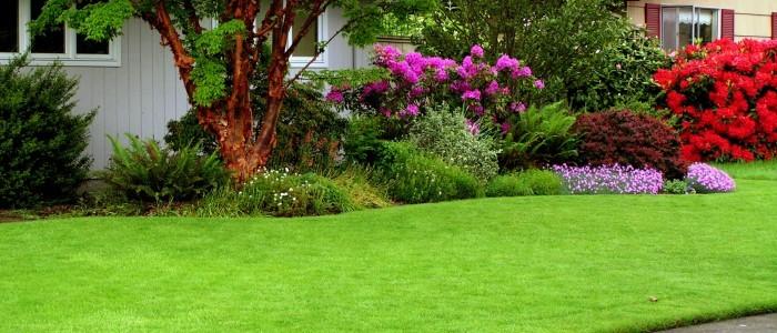Тайната за успешно озеленяване на двора ни