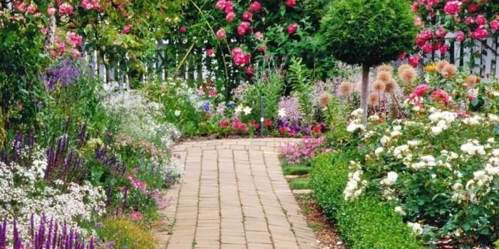 Кое е най-подходящото растение за вашата градина