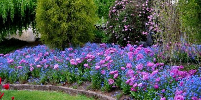 Как да създадем прекрасна градина в 7 стъпки