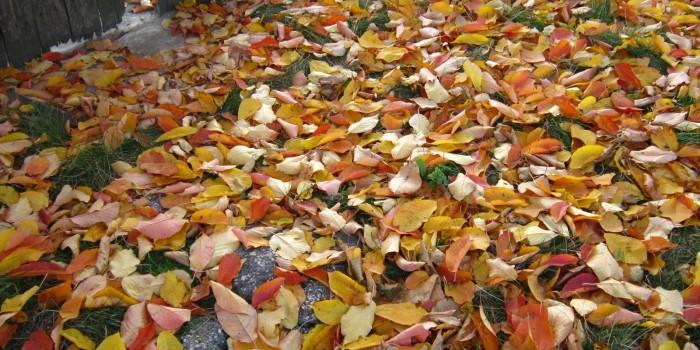 Как да се справим с есенните листа в двора