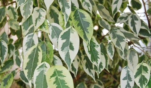 Стайните растения, които пречистват въздуха у дома