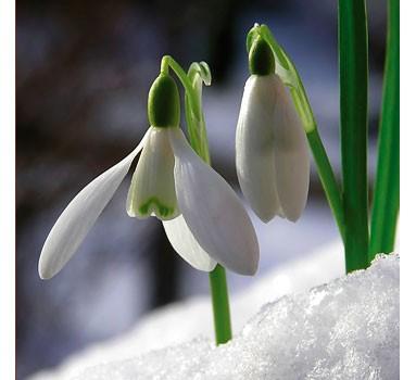 Кои дворни растения цъфтят през зимата