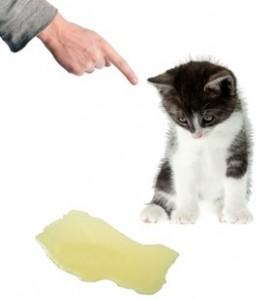 Как да почистим килима от котешката урина