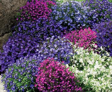 Кои цветя са подходящи за сенчеста градина