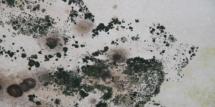 Как да се справим с мухъла без почистващи препарати