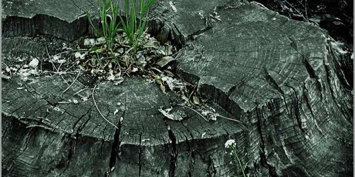 Как да премахнем дънер от отрязано дърво в двора