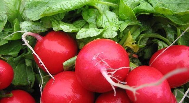 Какви зеленчуци да отгледаме през пролетта за по-малко от 60 дни