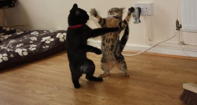 Трябва ли всяка котка да си има своя тоалетна