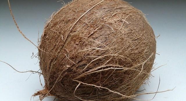 Как да си засадим кокосова палма у дома