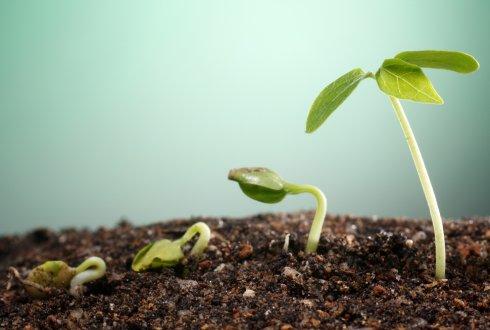 Защо е необходимо да се използват азотни торове в земеделието?