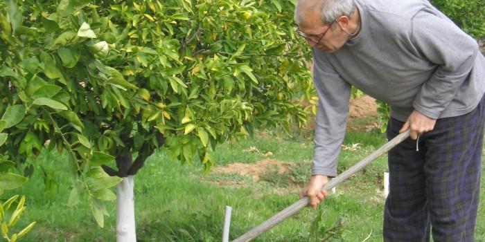 Грижата за дърветата – кое е полезно и кое не?