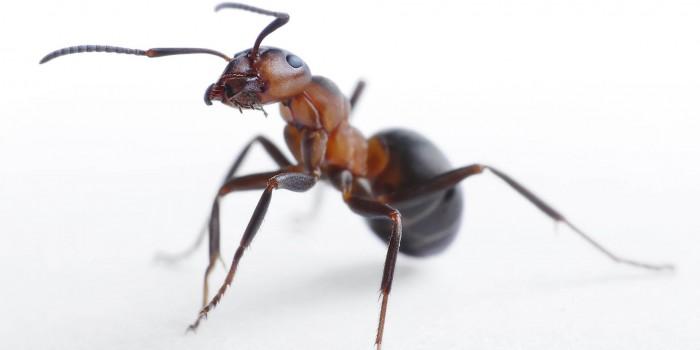 Препарат против мравки – кой е безопасен и как се използва?