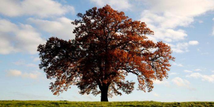 Органи на дървесните растения: лист