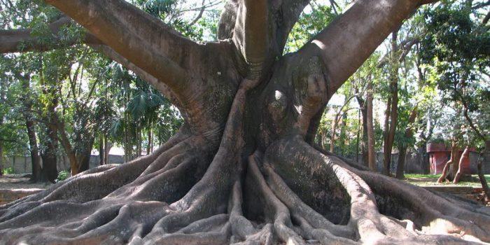 Органи на дървесните растения: корен