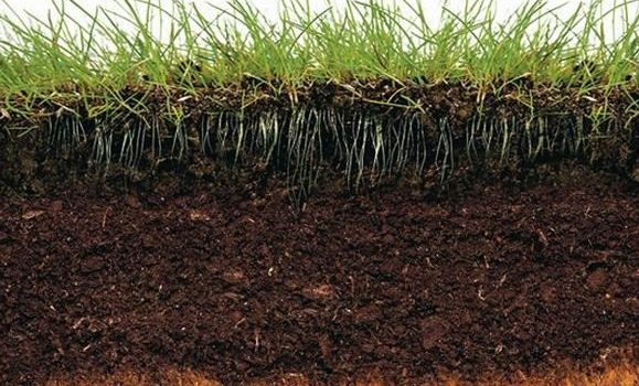Почвообразувателен процес