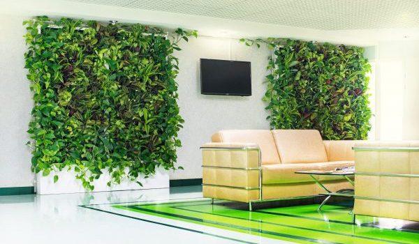 Зелени стени – съвременно озеленяване на интериора