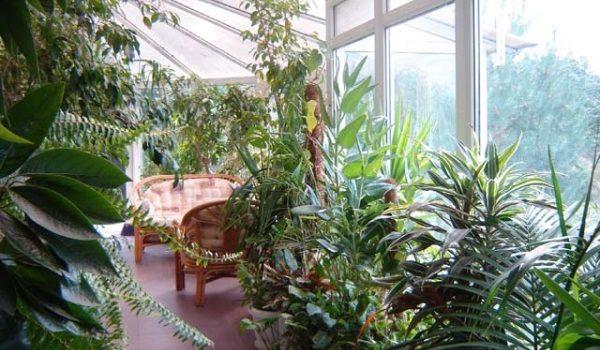 Зимно озеленяване на балкона – студоустойчиви растения
