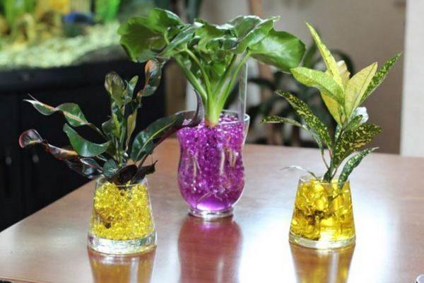 Хидрогел за цветя – как се използва
