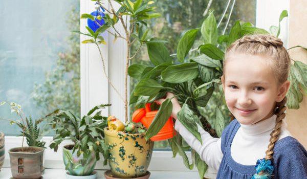 Топ 5 стайни растения за детската