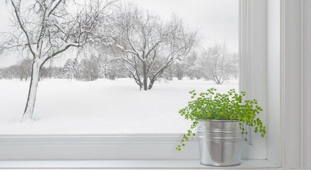 Как да подготвим цветята у дома за зимата