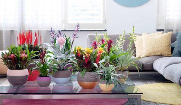 Какви растения носят щастие и благополучие в дома