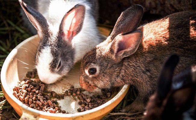 Коя храна е полезна за малките зайци