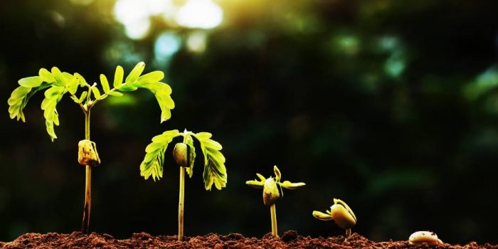 Как да полагаме грижи към невидимата част на растенията
