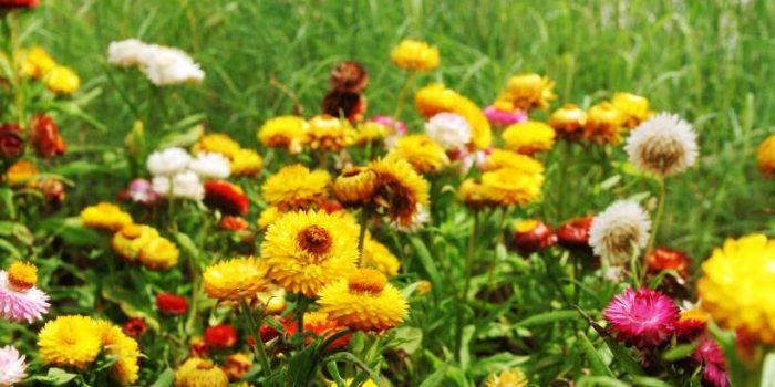 Безценни съвети за хората, обичащи цветята