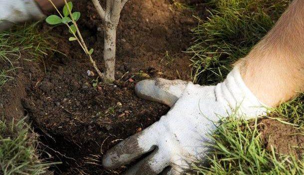 Направи добро – посади растение. Но как?