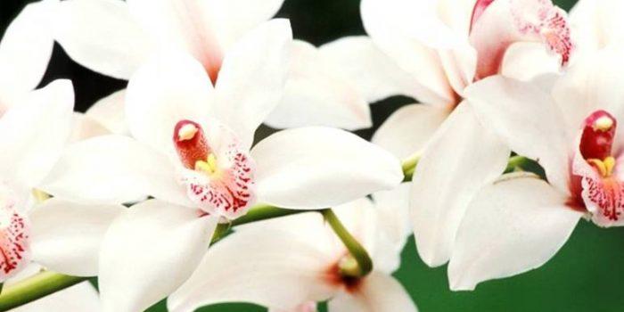 Орхидеи – 5 съвета за правилна грижа