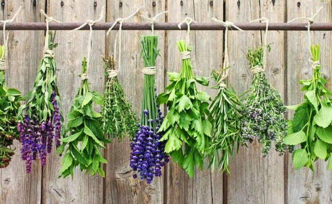 Какви билки да включим в своята билкова градина